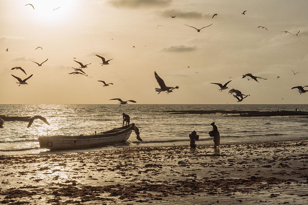 Contraluz de una barca y gaviotas al atardecer en la playa de Tanji en Gambia