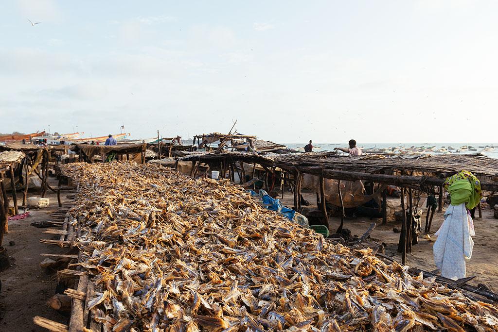 Secadero de pescado en la playa de Tanji, Gambia