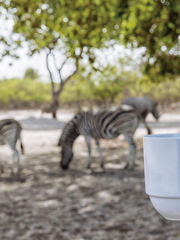 Un café mientras vemos cebras en Fathala Wildlife Reserve, Senegal
