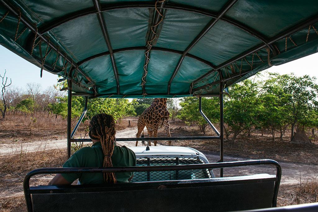 Coche de la reserva de vida salvaje de Fathala, con jirafa
