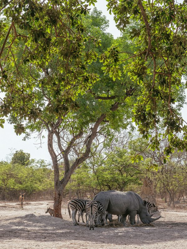 Manada de animales salvajes en reserva de vida salvaje de Fathala