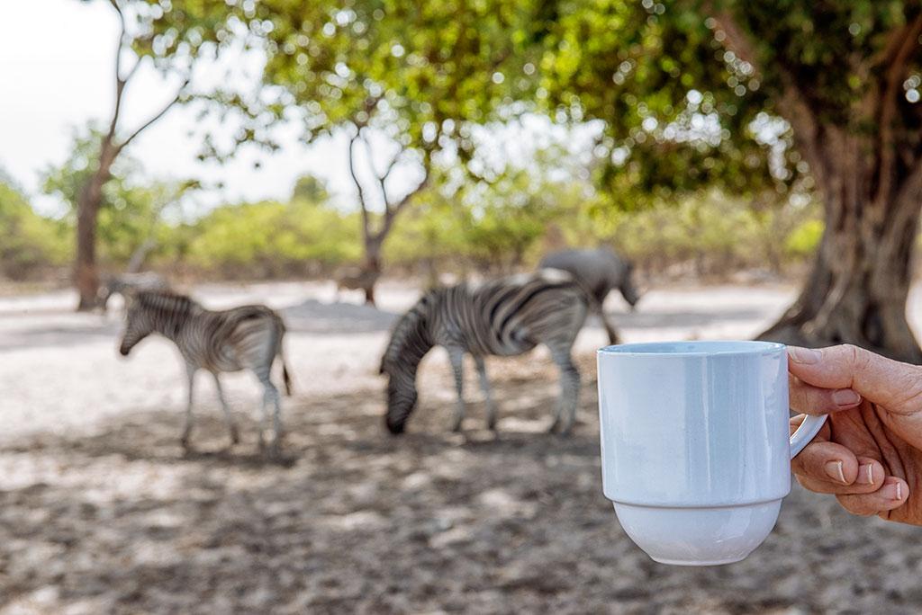 Café con vistas a las cebras en la reserva de vida salvaje de Fathala