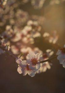Detalle de flor floración de Cieza