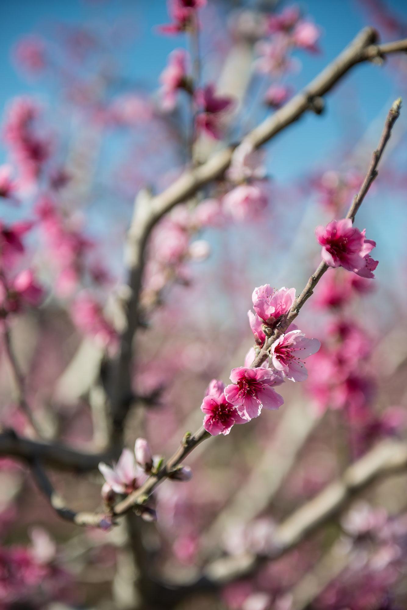 Detalle rama de árbol en flor