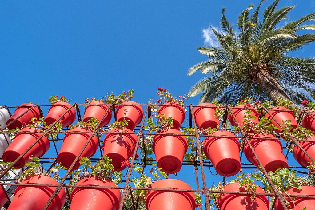 Macetas de flores en Murcia