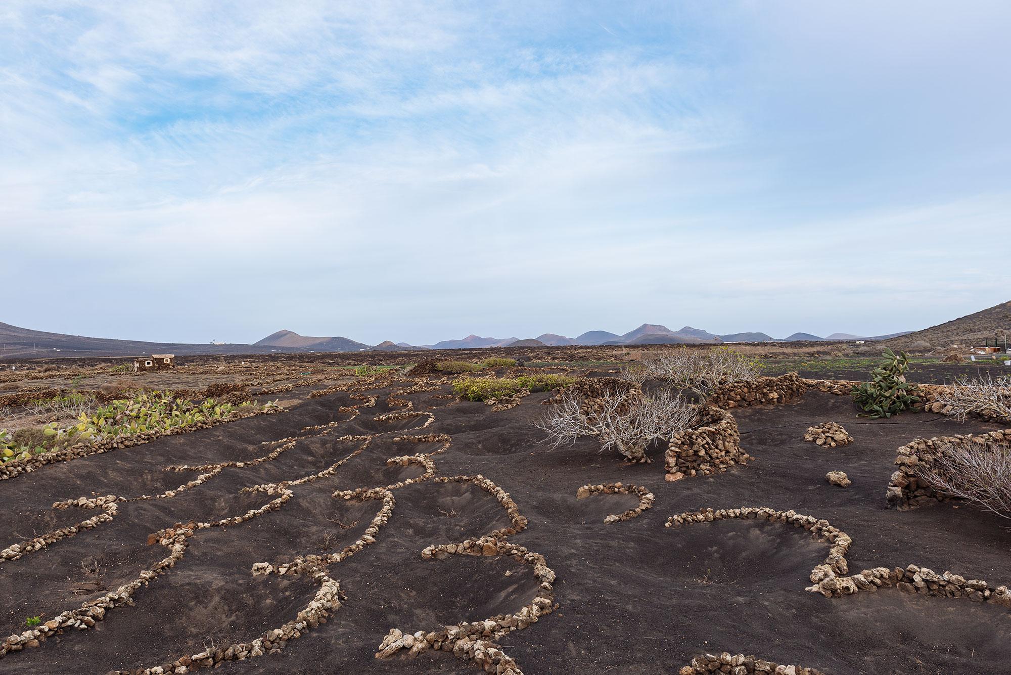 Vinos de Lanzarote paisaje de La geria