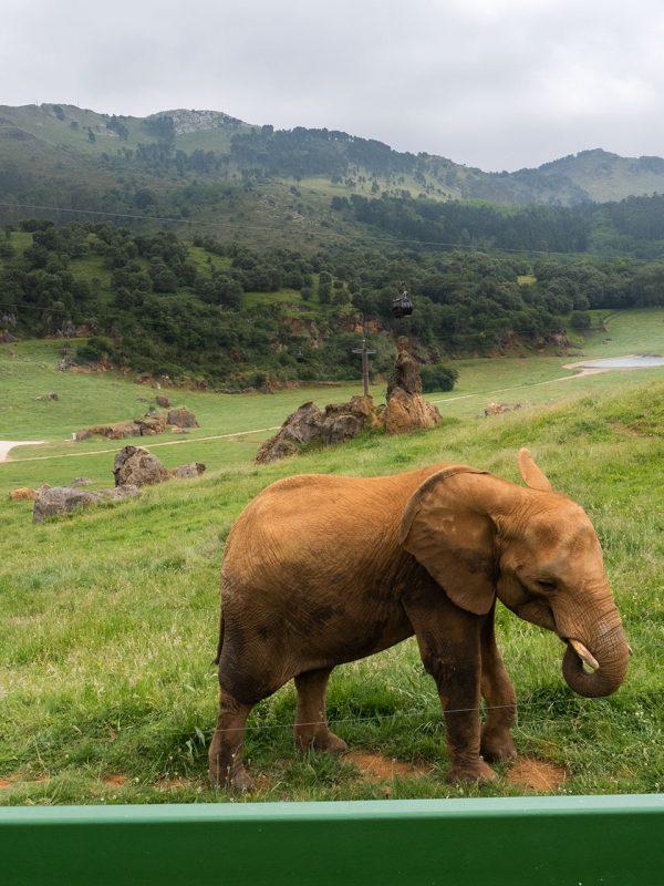 Elefantes en Parque Natural de Cabárceno