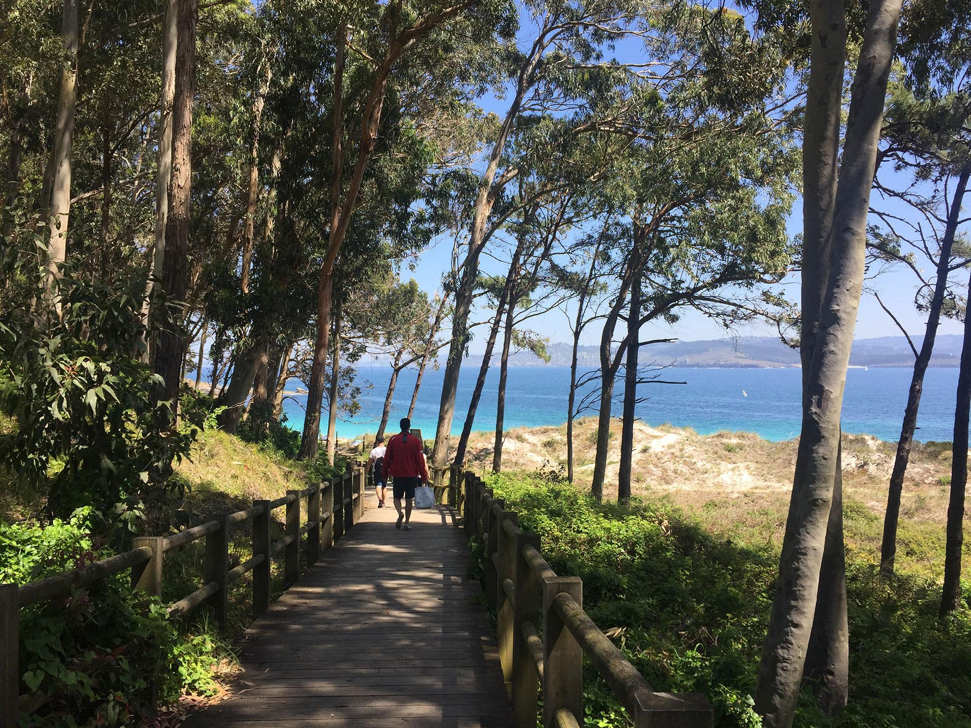 Paseo entre árboles en Islas Cíes