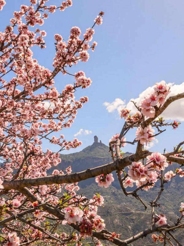 Tejeda almendros en flor