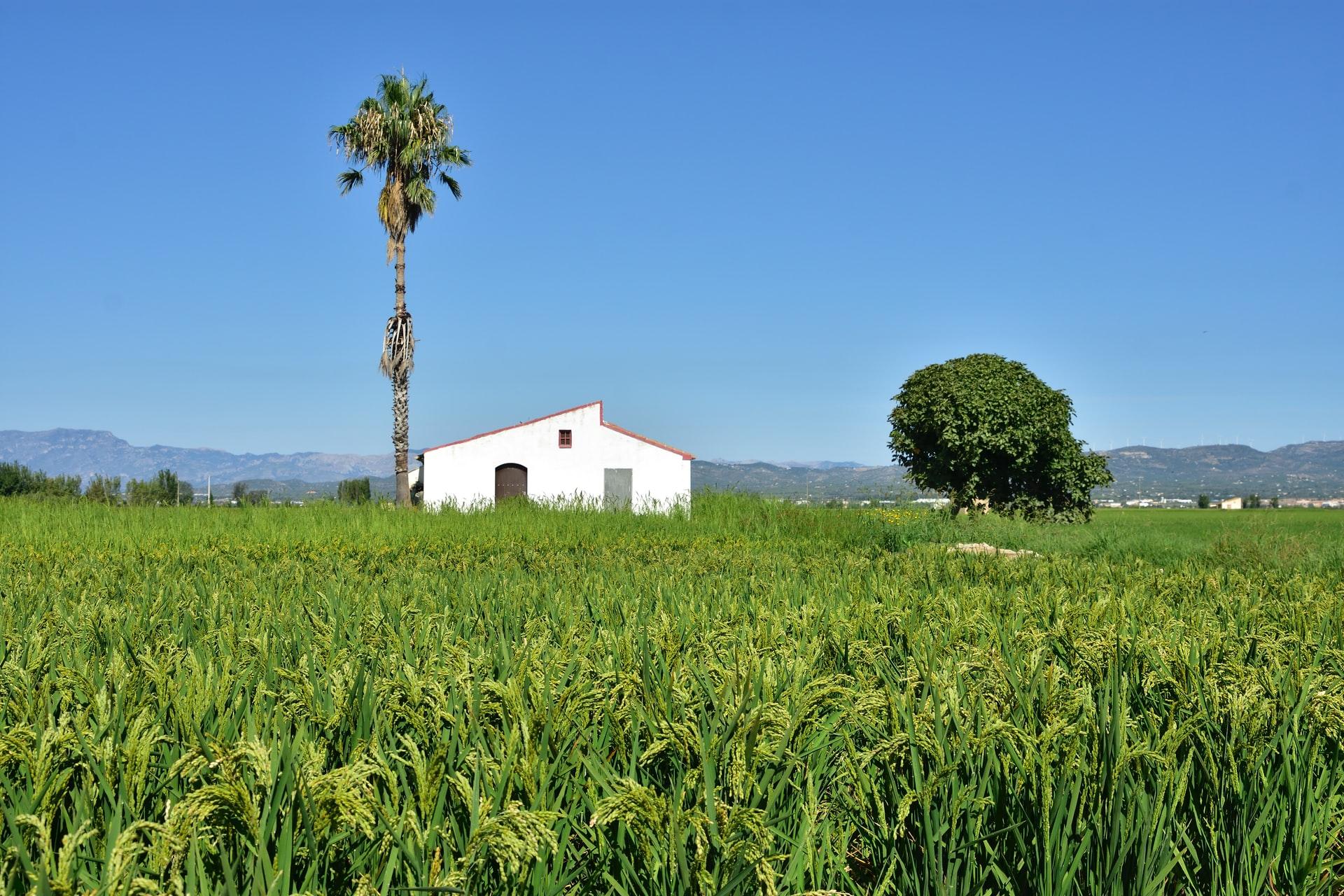 Delta del Ebro. Gastronomía Tarragona